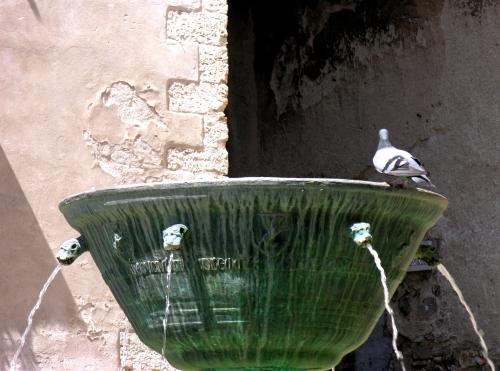 3 Fontana con piccione
