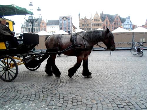 Mutande al cavallo