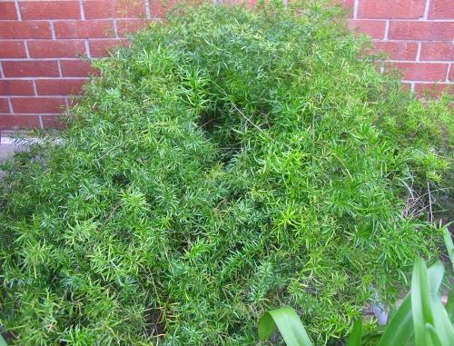 Montagnola verde