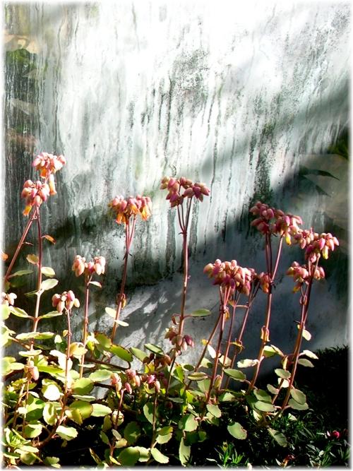 Piccoli fiori crescono