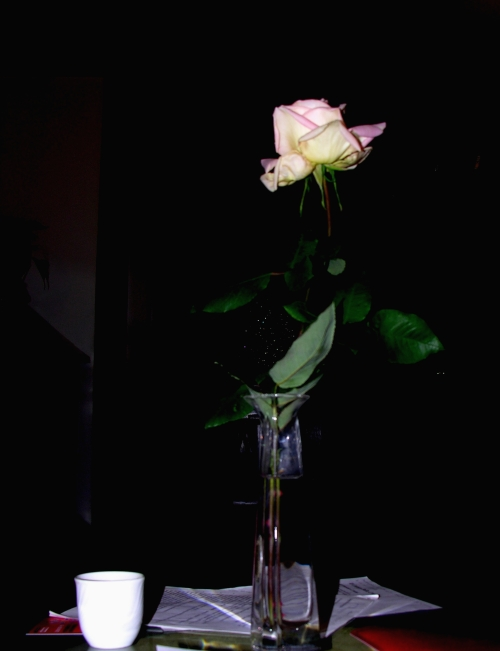Interno con rosa (scuola olandese)