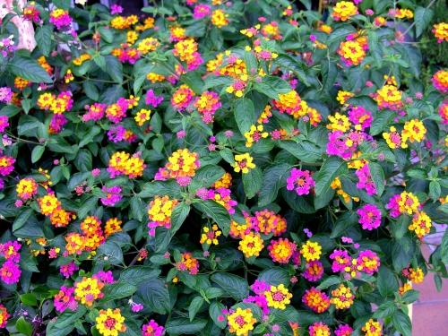 Tappeto fiorito