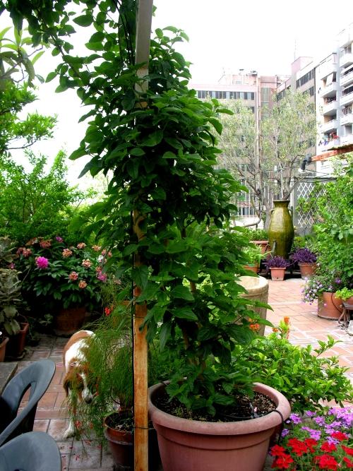 Panoramica con cane e fontana